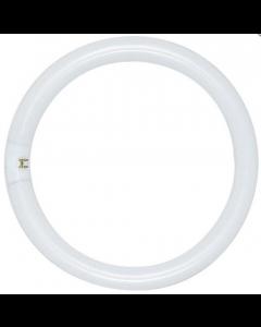 Satco FC8T9/CW/RS (S6500) 22 Watt T9 Circline Lamp